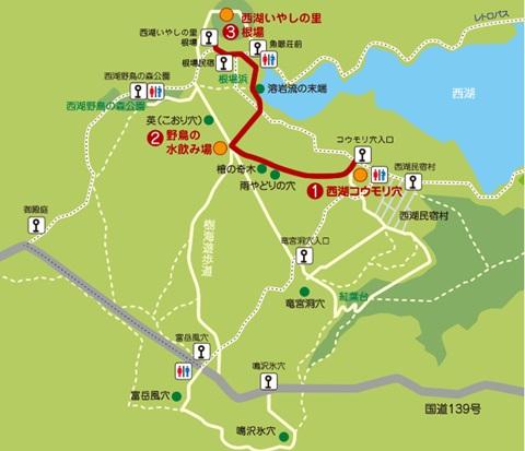 青木ヶ原樹海、散策コース